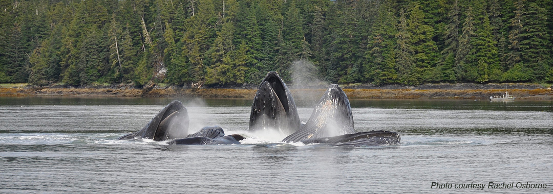 Bubble Net, photo by Rachel Osborne