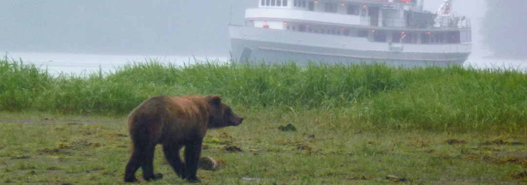 bear-in-the-mist