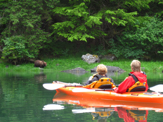 Bear on shore viewed from kayak