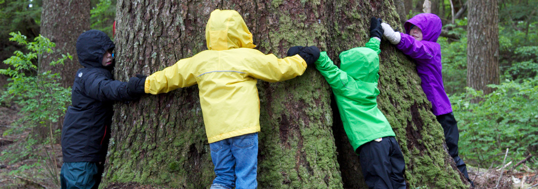 embracing-a-giant-of-the-forest